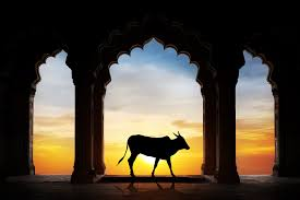 Sacred Cows in the Church: Honoring Marriages over Lives